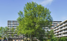Wohnhaus Groenhof-Amstelveen-Groenelaan